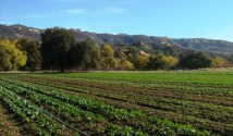 organic farm in northern California