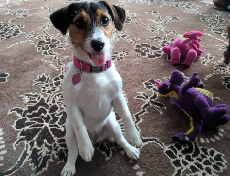 View of Mitzy our Jack Russell here in Fort Lauderdale
