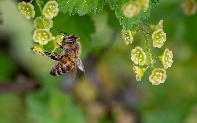 Bee Swarms - What Residents Can Do To Help