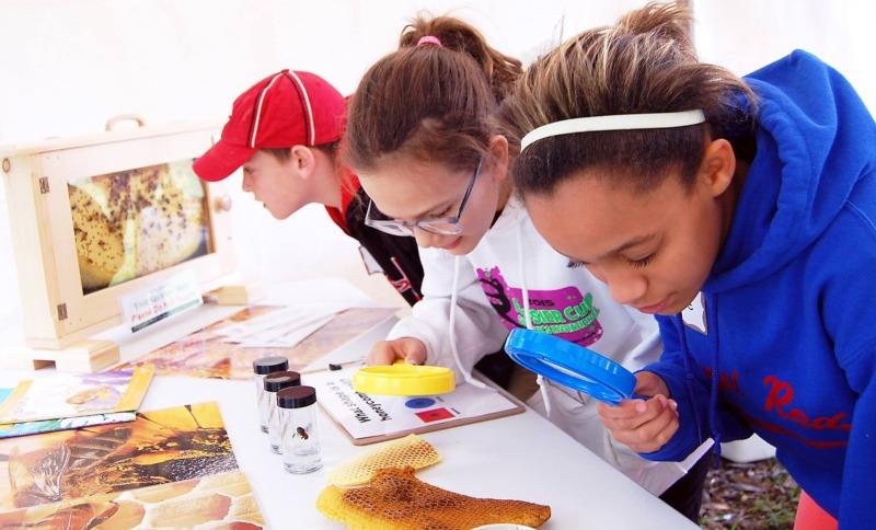 Exploring Pollinators Through Fun Educational Experiences