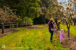 Hand in hand through the orchard