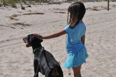Willow the Dobie is guarding her charge during a day at the beach.