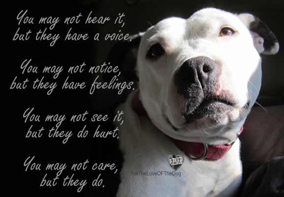 but they do Pitbull Dog Love Quotes