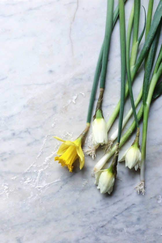 Spring Onions + Buttercups | for the love of the south