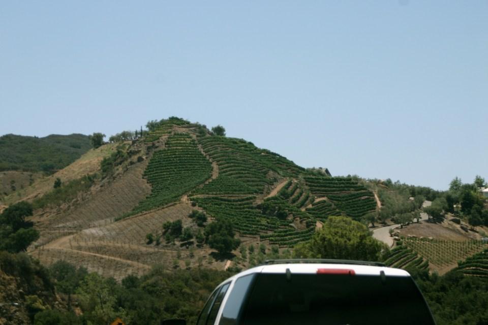 Vineyards on the way to Malibu