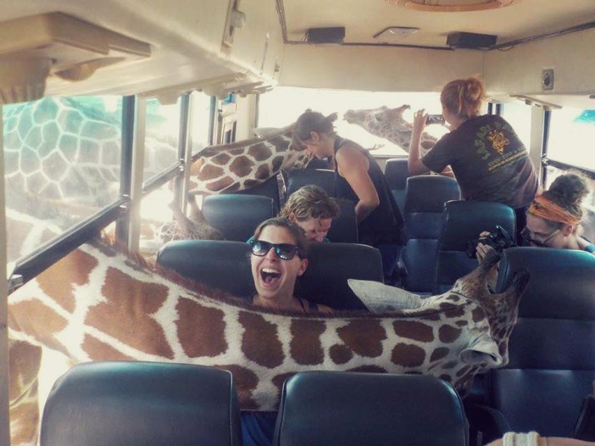 Ungulates-Safari-Park-Giraffes-8