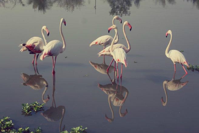 Ungulates-safari-park-flamingos