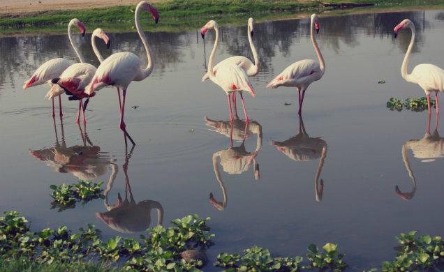 ungulates-safari-park-flamingos-1