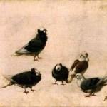 Pigeons. Jose Ruiz y Blasco.