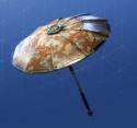founders-umbrella-1