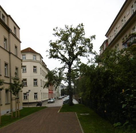 Neuer Zugang zum Alaunpark (West) (2)