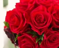 12月の誕生花!赤バラを大切な人に贈る時の6のポイント