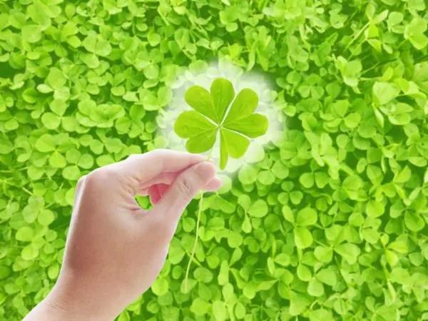幸せな花言葉②幸せを願う四つ葉のクローバー
