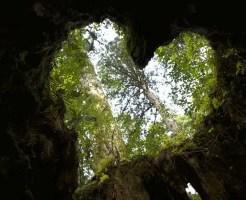 四緑木星の女性の性格から分かる6の恋愛傾向