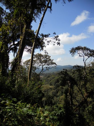 Kibira Forest