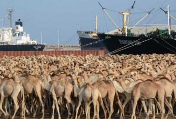 Exports of Somalia