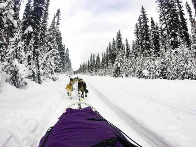 Dog Sledding in Lake Louise, Banff National Park