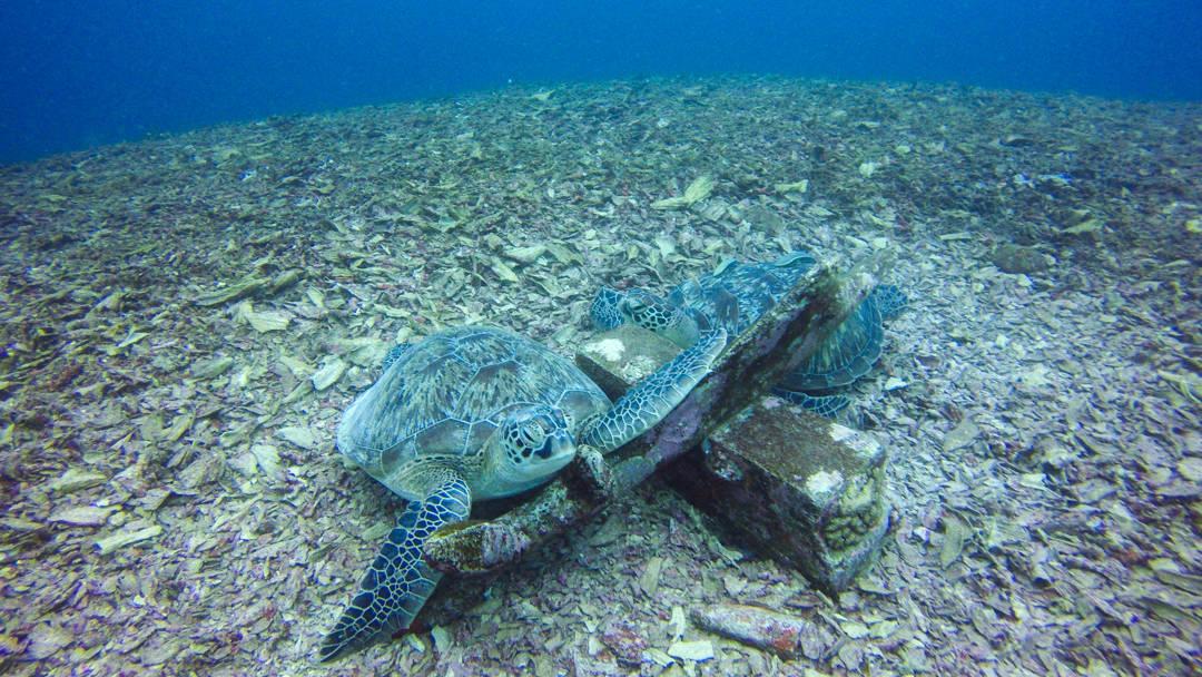 Scuba Diving at Gili Air Lombok Indonesia