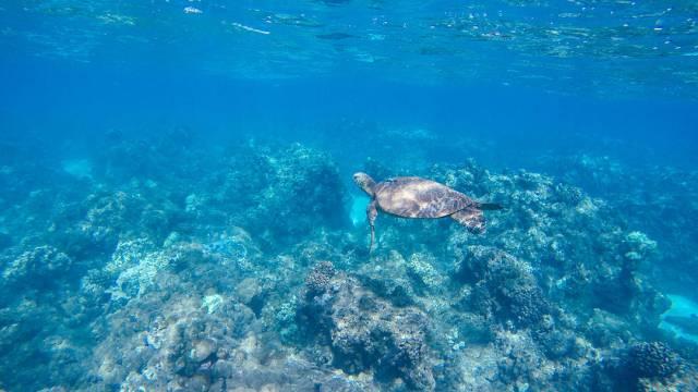 Whale Watching Snorkelling Maui Lanai