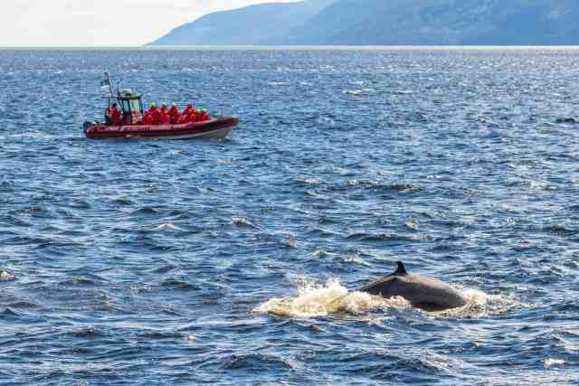Whale watching in Quebec Maritime, Canada