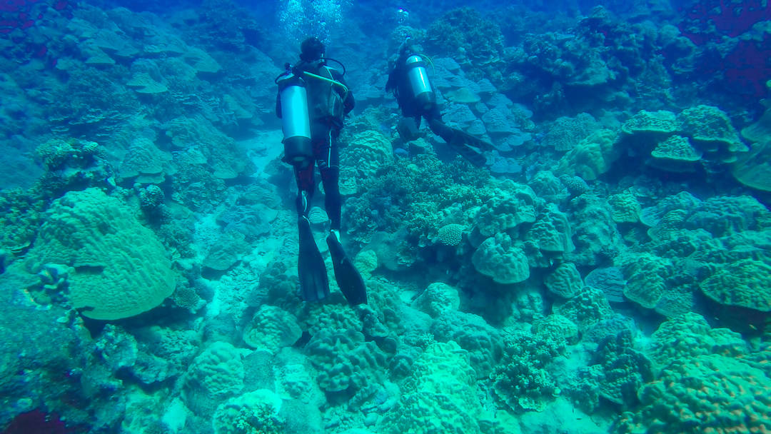 Let's Go Diving! The Best Way To Explore Rarotonga, Cook Islands