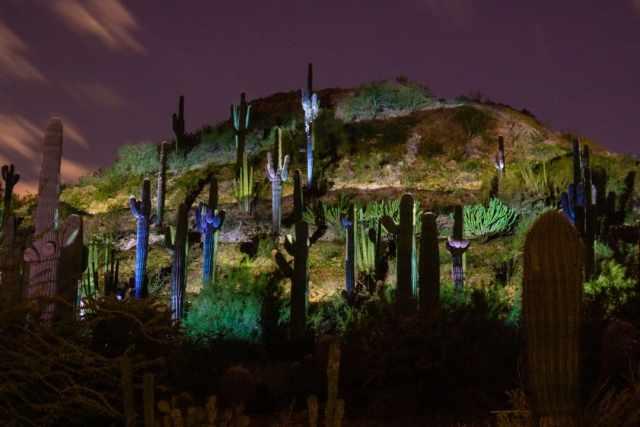 Desert Botanical Garden Scottsdale