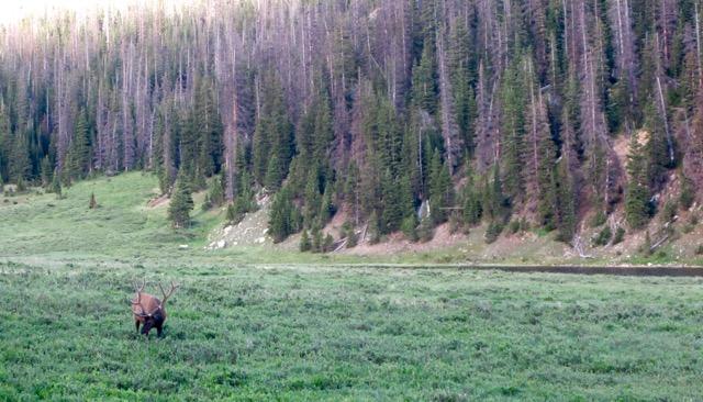 Rocky Mountain - 3