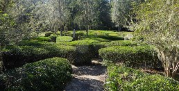 Other states have corn mazes. Here in South Carolina, it's a hedge maze. Photo by T.