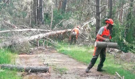 Uns operaris retiren arbres caiguts als boscos de la zona de la serra del Cadí