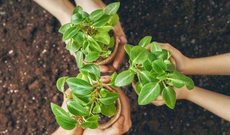 Plantes ecològiques