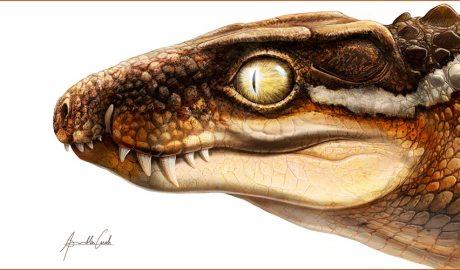 Recreació de l'aspecte en vida de la nova espècie de cocodril Ogresuchus furatus (Aina i Agnès Amblás / ICP)