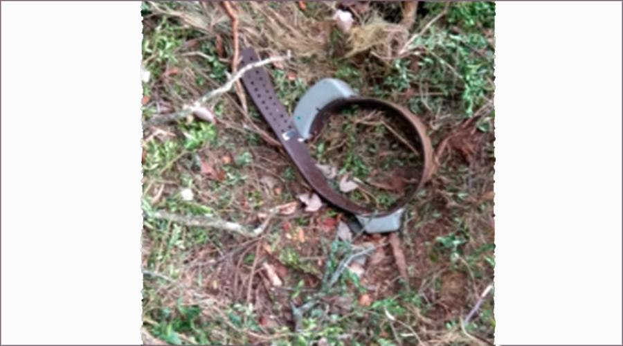 El collar GPS de seguiment de l'ós Goiat, trobat a la Ribagorça.