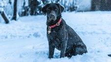 Un gos a la neu