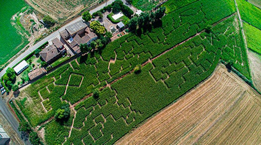 Laberint de blat de moro de Castellserà