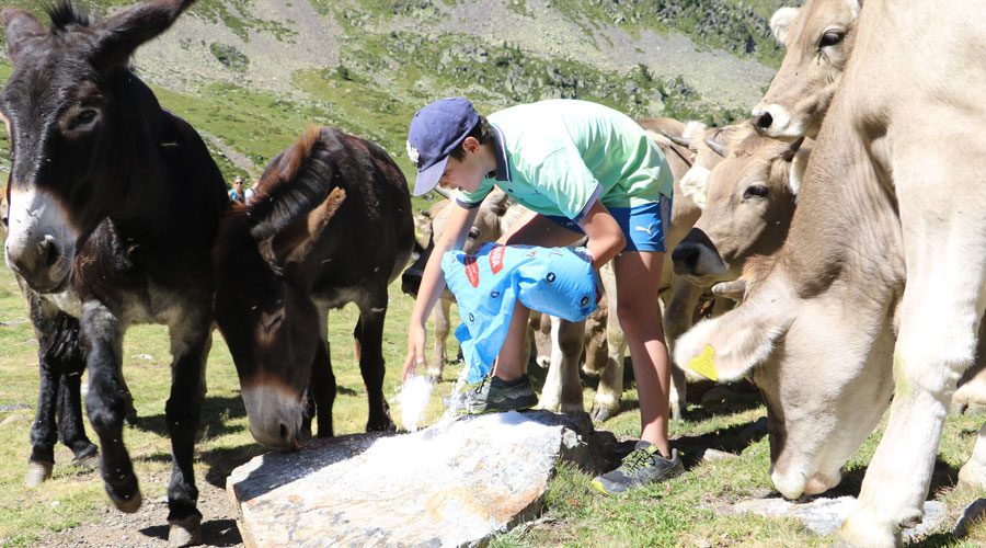 Un jove donant sal als animals en una sortida guiada a Sorteny