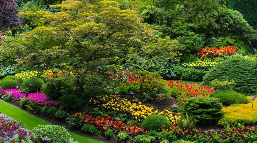 plantes sota els arbres