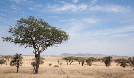 Paisatge de l'Àfrica Subsahariana