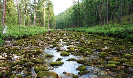 Curs d'un riu amb poc cabal