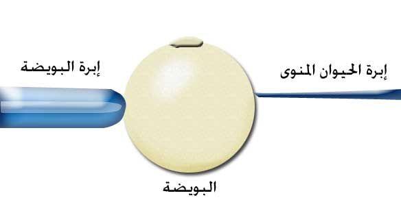 منتديات حوامل النسائية عرض مشاركة واحدة الحقن المجهري او