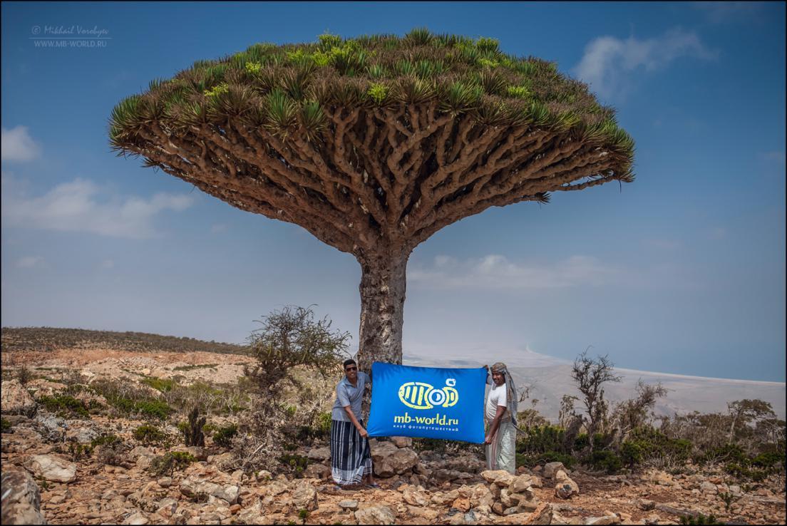 Драконовые деревья острова Сокотра 24