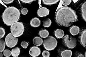 Photo of Tree rings by Aleksandar Radovanovic from Unsplash photos