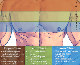 chest workouts forweightcontrol com - For Weight Control