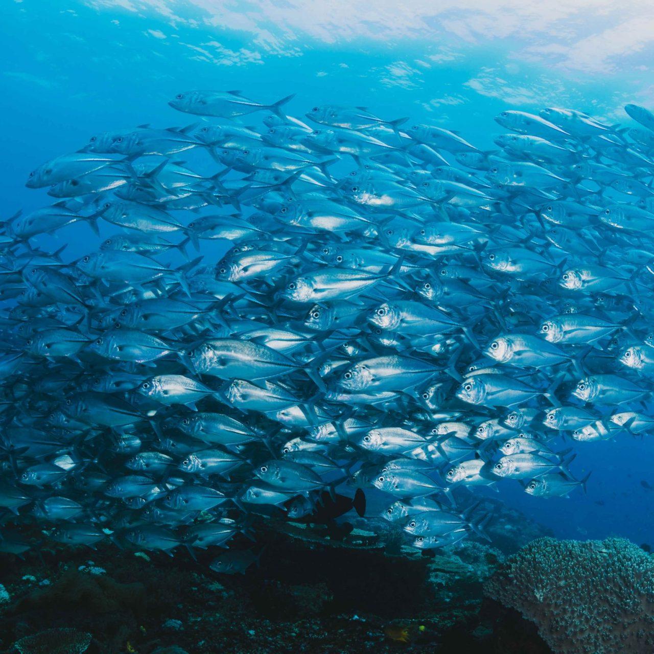 https://i2.wp.com/fossa.systems/wp-content/uploads/2021/05/shoal-of-fish-underwater-scaled.jpg?resize=1280%2C1280&ssl=1