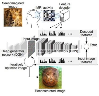 Mind-reading AI Image Reconstruction 1