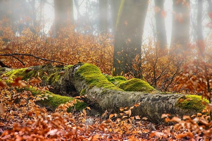 autumn-3356322_1280.jpg