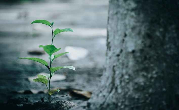 green leaf plant beside tree