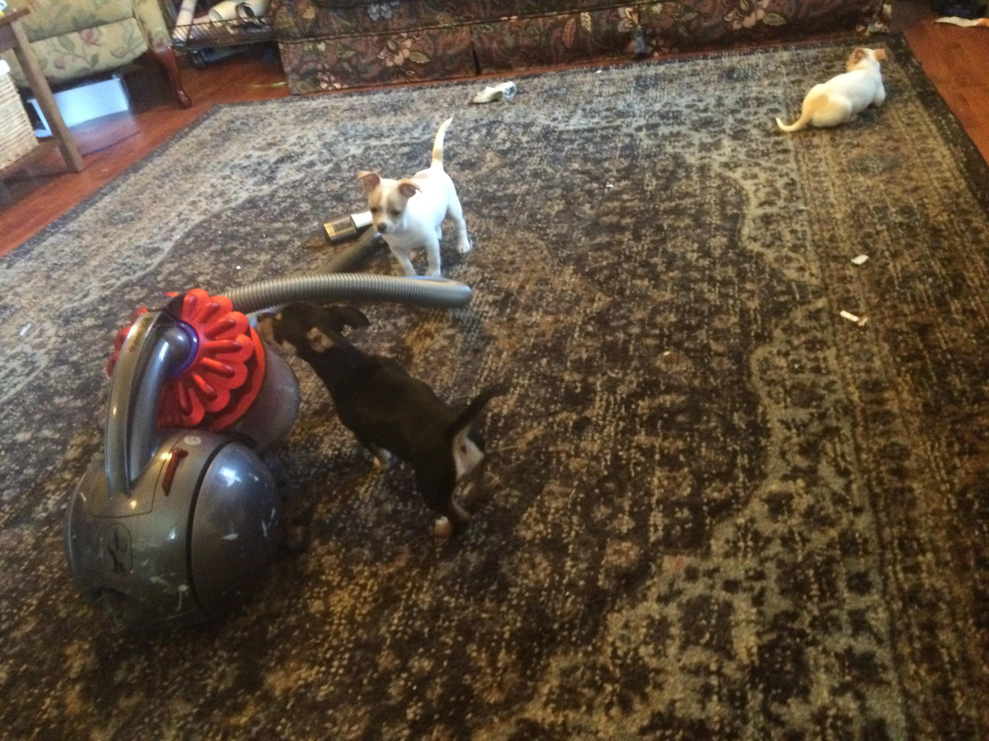 The Potty Gang: Vacuum Training 101