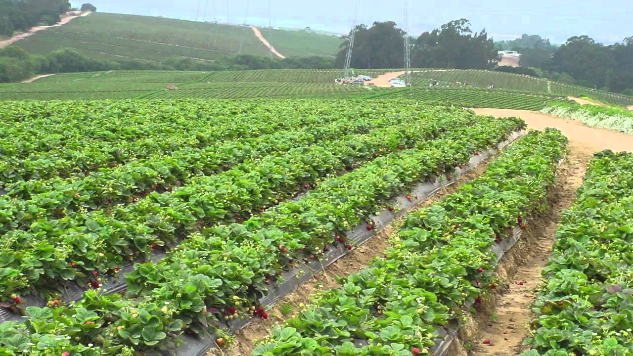 Importance of Organic Agriculture in Nigeria