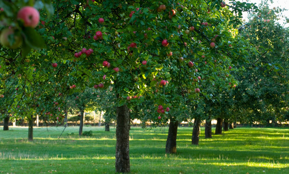 Benefits of Orchards to the Environment