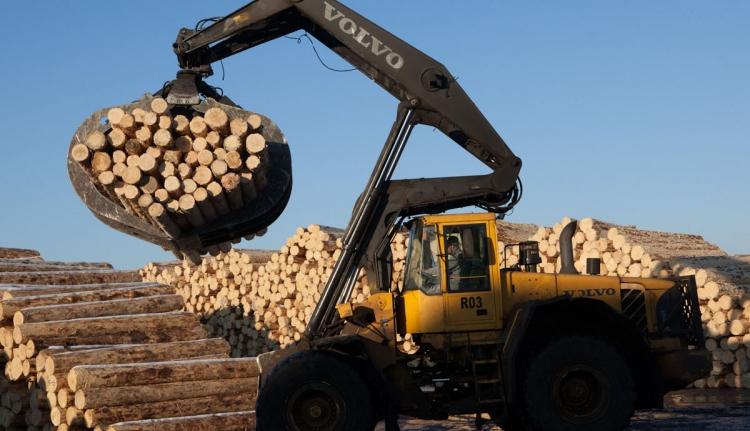 Durván letarolhatja a romániai erdőket a Schweighofer